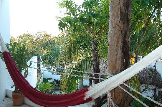 Mi Casa en Cozumel: mamey