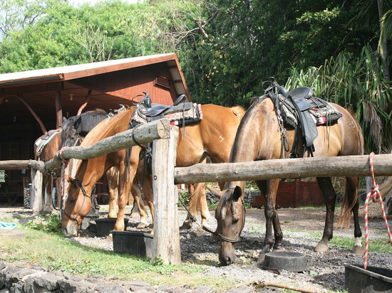 Hana, Hawaje: Horses waiting to go to work