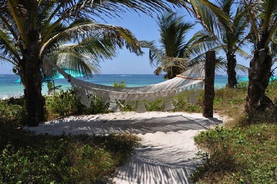 Diani Blue: A hammock facing the beach.