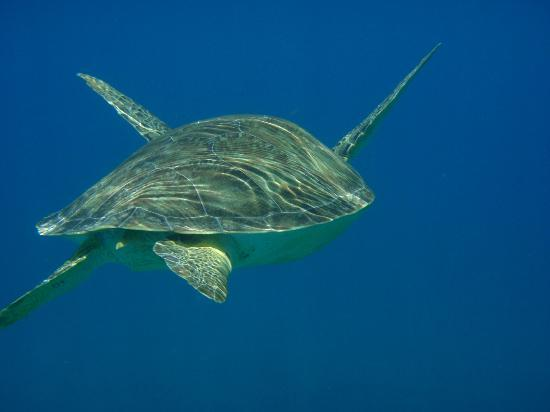 Good Day Charters: swimming with the turtles