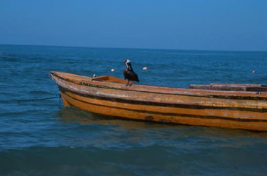 Marblue Villa Suites : fishing boat @ Calabash Bay