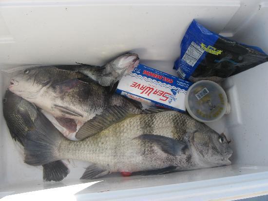 Sport Fishing Gullah Gal: Dinner