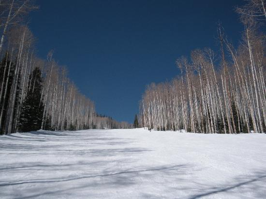 Silver Star at Park City: aspen trees-park city