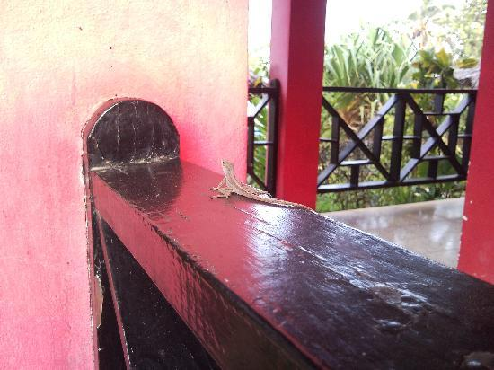 Negril Escape Resort & Spa: lizards