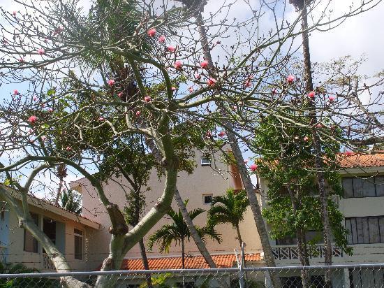 Hotel Beach House Playa Dorada: Trees