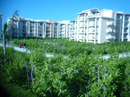 Now Jade Riviera Cancun: la super végétation