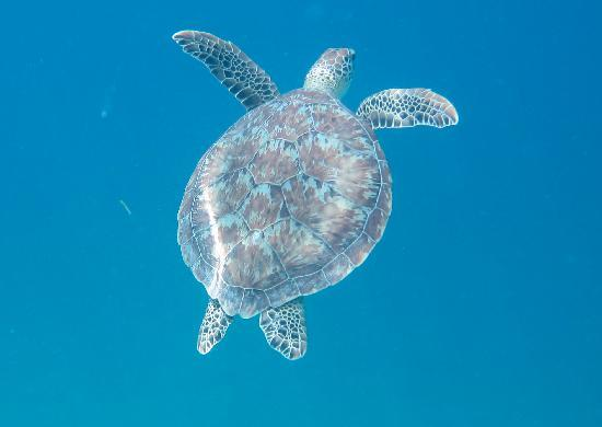 Fury Charters: Yes, there are turtles