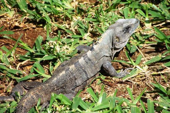 El Dorado Sensimar Riviera Maya: Lots of these guys living here