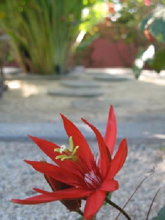 The Hotelito: The Garden