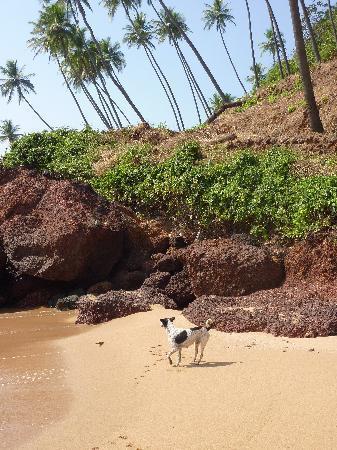 Candolim, Índia: Cola Beach
