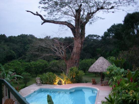 Belize Jungle Dome: View of swimming pool from our deck