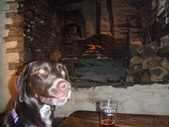Blue Ball Inn: Dog friendly and good beer