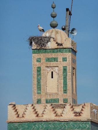Riad Assakina: minaret et cigogne