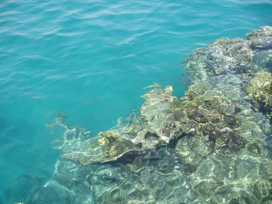 Three Corners Fayrouz Plaza Beach Resort: het rif vanaf de pier