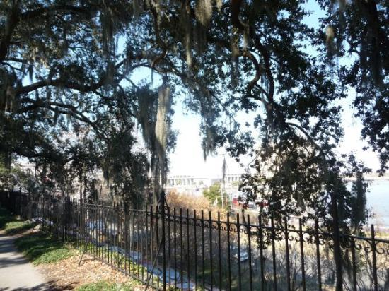 Savannah, GA: One of my favorite things about the south are these incredible live oak trees with the moss hang