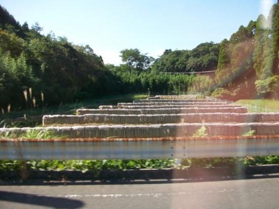 Kagoshima, Japan: Rice