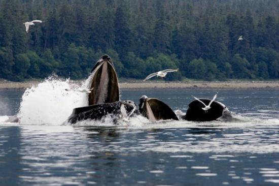 Juneau Photo