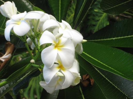 Bilde fra Kauai