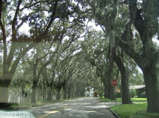 St. Augustine, FL: Spanish Moss