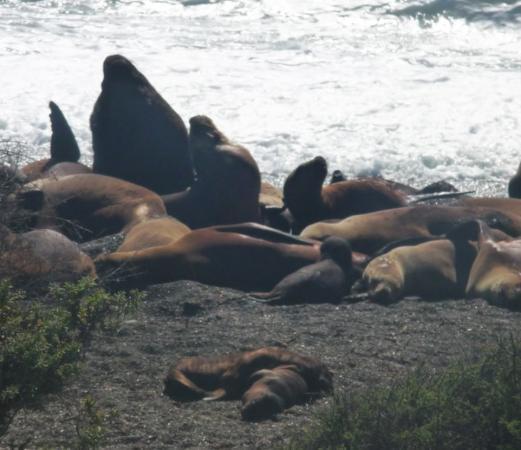 Bilde fra Puerto Madryn