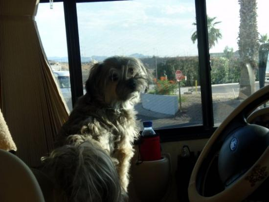 Leesburg, FL: When Dave gets tired of driving, Trudie takes over