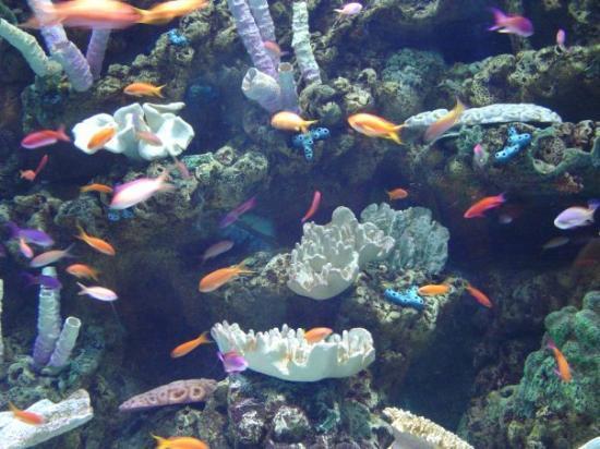Long Beach, CA: Tropical reef