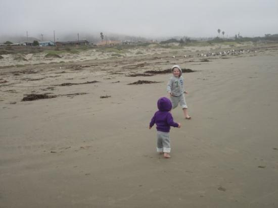 Morro Bay, CA: They were chasing each other.