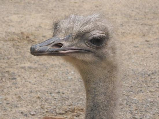 Bilde fra Barcelona Zoo