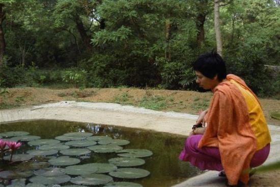 Chennai (Madras), India: lotus pond of contemplation