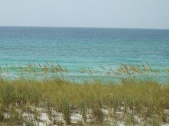 Navarre Beach: sea oats and ocean
