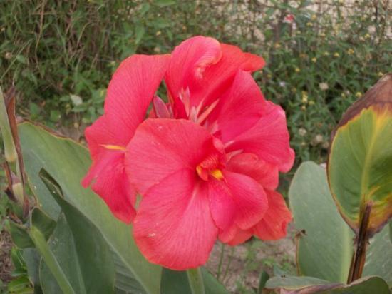 Noblesville, IN: Flowers in Ignacio's parents yard
