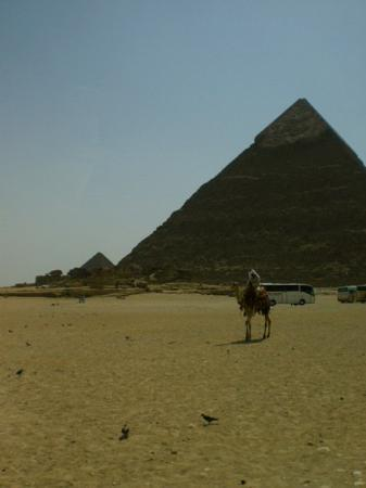 Moon River Tours - Day tours: Gisa, Egypt.