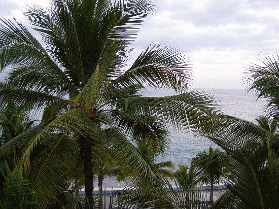 Las Palmas by the Sea: View from our room blocked by palms.