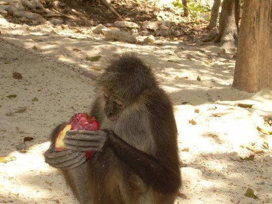 Edventure Tours: Spider monkey outside cenotes