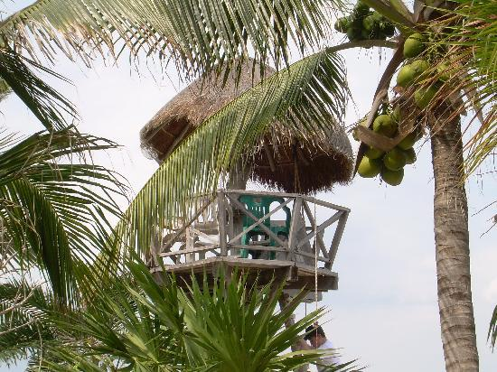 Edventure Tours: Tree house at La Buena Vida