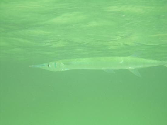 Edventure Tours: Snorkeling in Yakul Lagoon