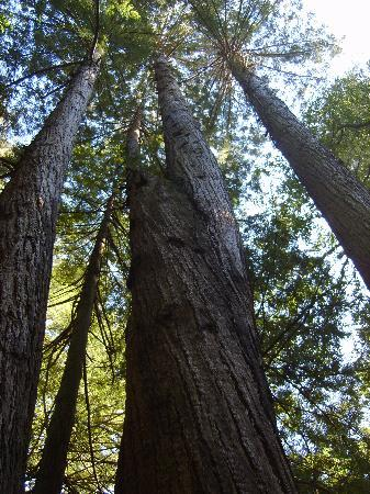 Central Coast Outdoors: Redwoods