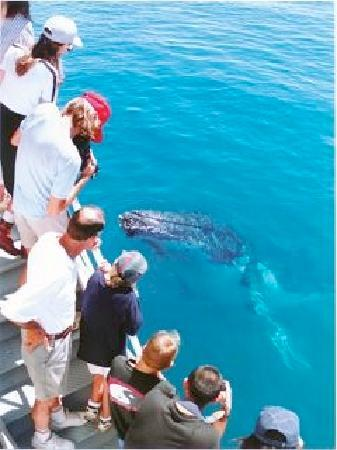 PacWhale Eco-Adventures: Watch whales from November through May with Pacific Whale Foundation.