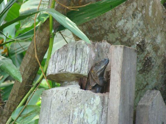 Casas de los Suenos: Lizard in gatepost of Oasis