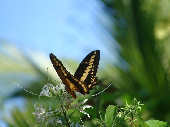 Casas de los Suenos: Butterflies galore!!!!!