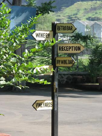 Tiger Hill Vineyards Resort & Spa: 下に「畑」とあるけど、客に見せる程度の小さな規模。