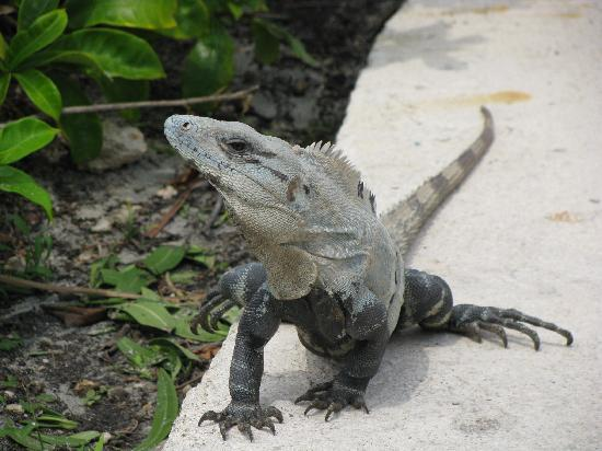 Fairmont Mayakoba: A little friend visiting us while sun bathing