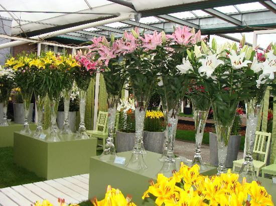 Keukenhof: The cut flower show