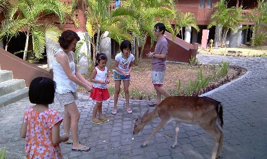 Sibu Island Resort: Deer feeding