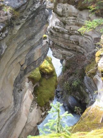 Bilde fra Jasper National Park