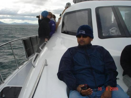 Whale watching around Hermanus, near Cape town, South Africa