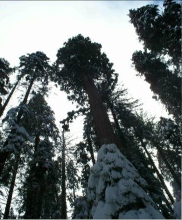 Bilde fra Sequoia and Kings Canyon National Park