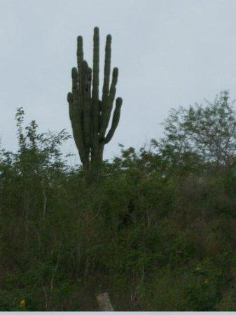 Noblesville, IN: Cactus on Ignacios land