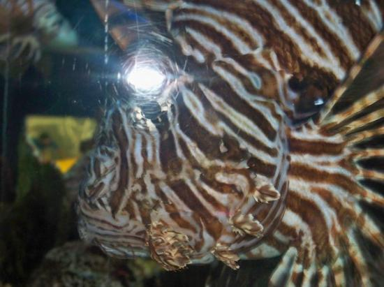 Baltimore, MD: Lionfish