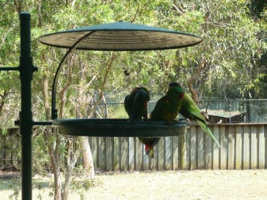 Bilde fra Lone Pine Koala Sanctuary